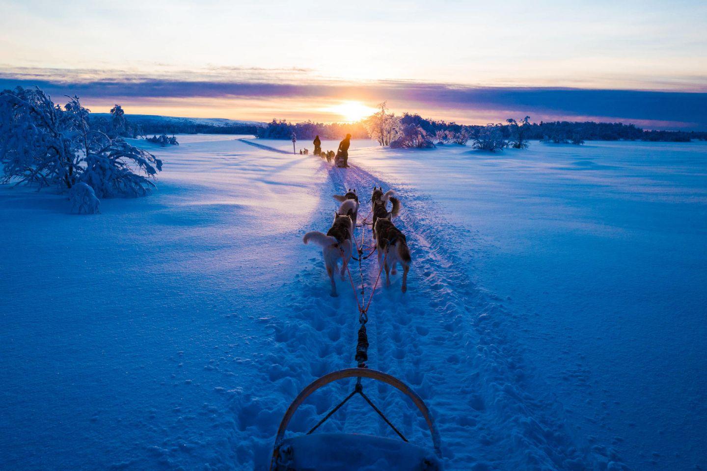 Hetta Huskies in Enontekiö, Finland