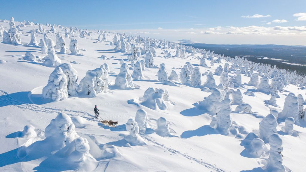 Wandering among the snow-crowned trees in Finnish Lapland