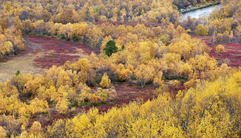 Fall colors in Utsjoki, Lapland, Finland