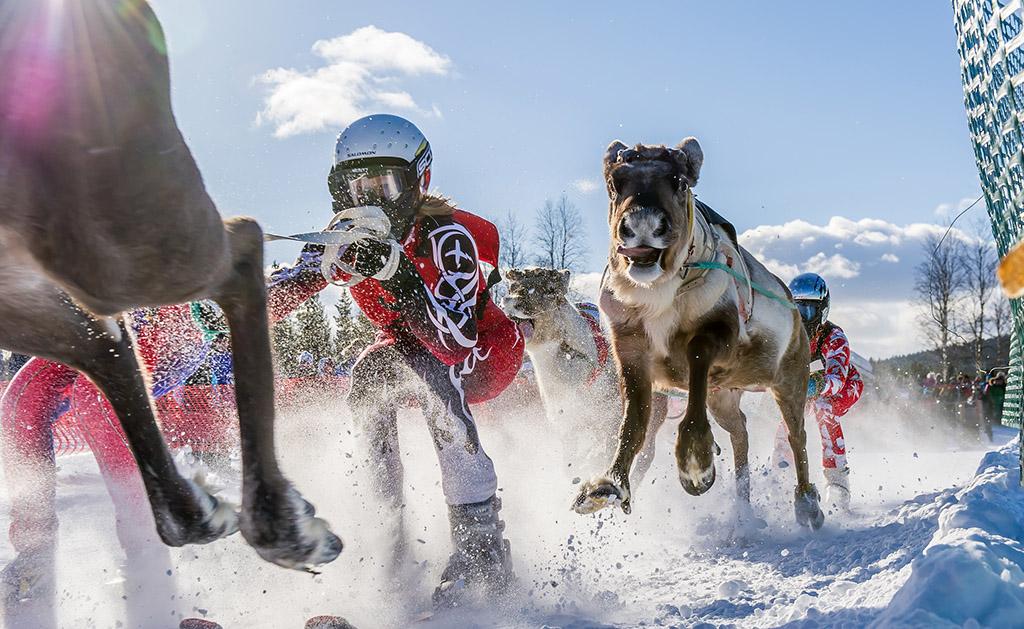 Reindeer race in Lapland, Finland