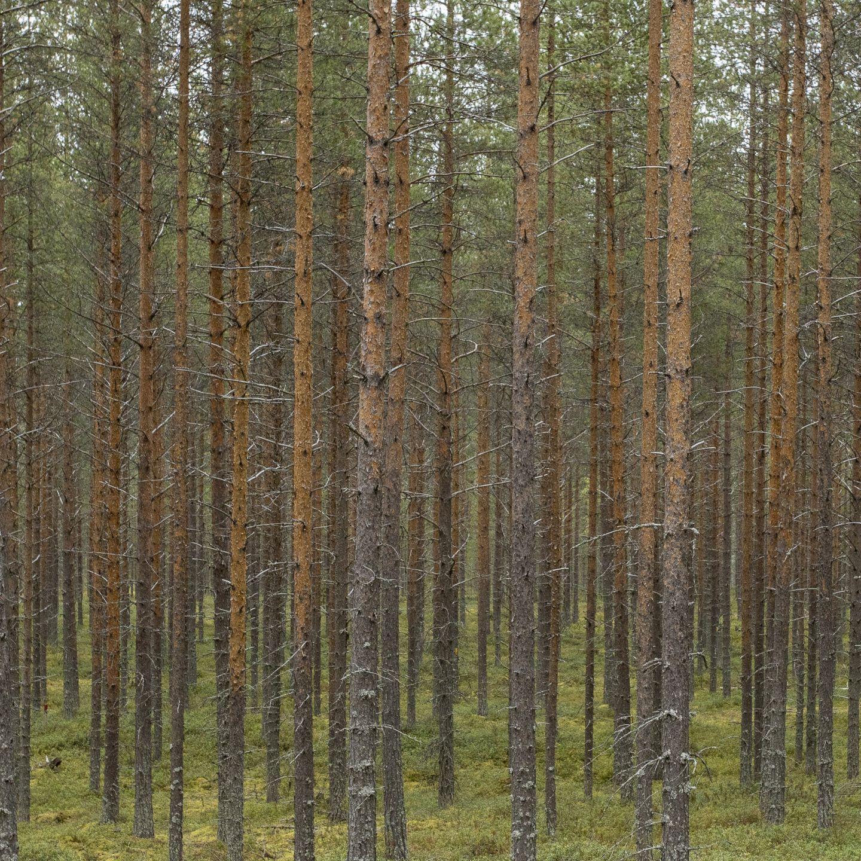Metsäbiotalous