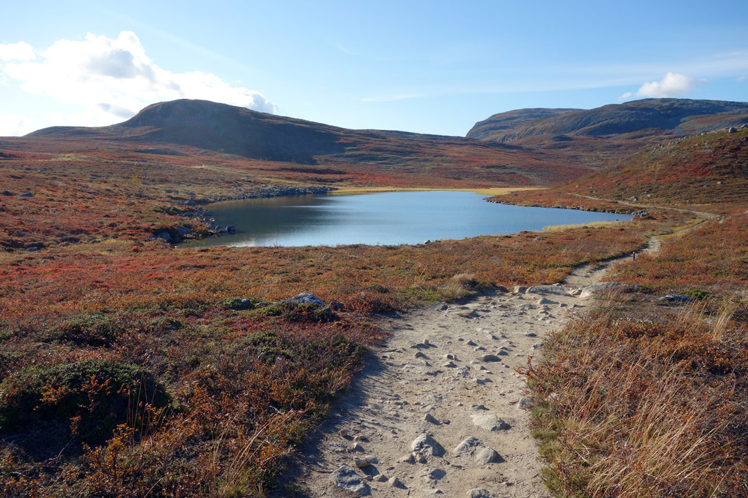 autumn-foliage-in-the-arctic