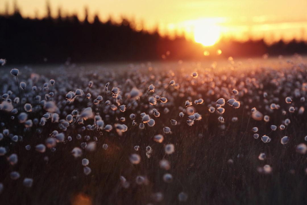 24-hour-sunlight-in-Finland