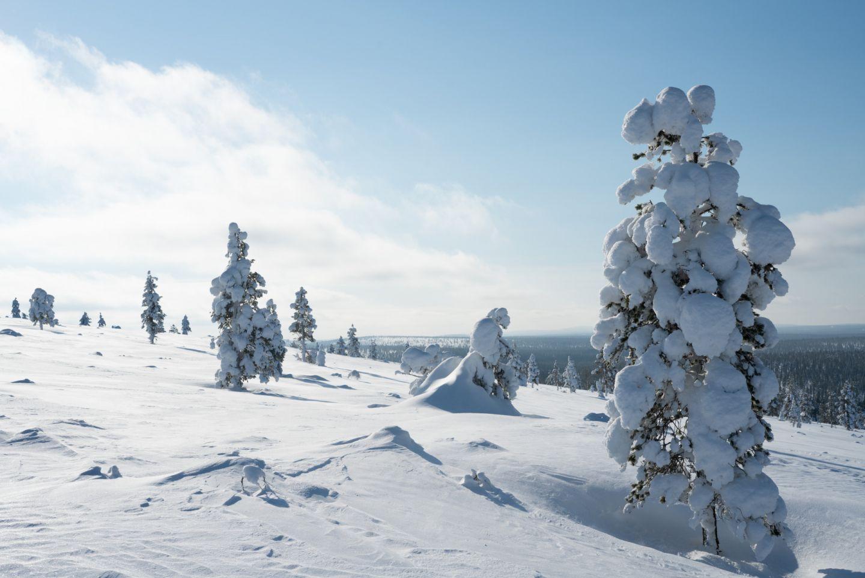 Pure winter nature in Finnish Lapland