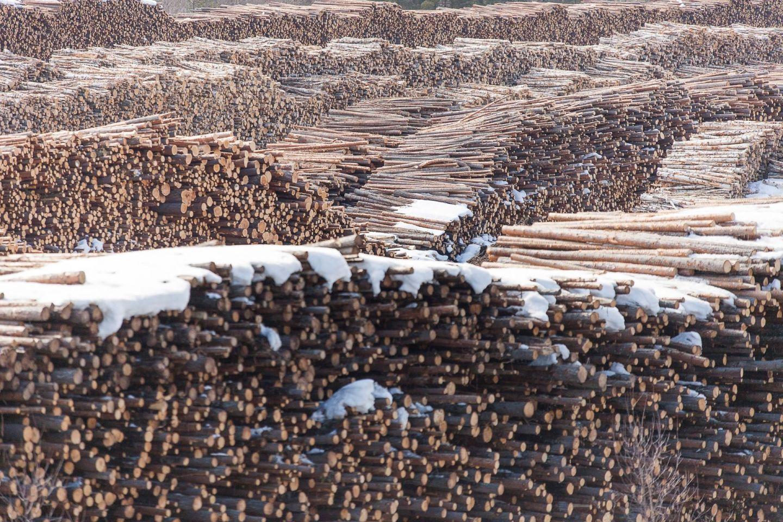 Näkyvin ala uusiutuvista luonnonvaroista on edelleen metsätalous.