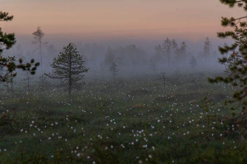 Kaitasuo in Ranua, Lapland, Finland