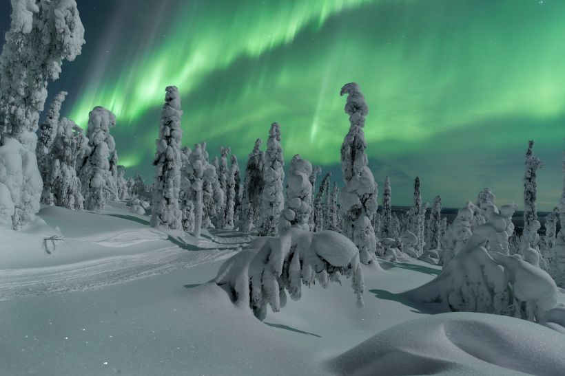 Northern Lights over snow-covered trees in Lapland