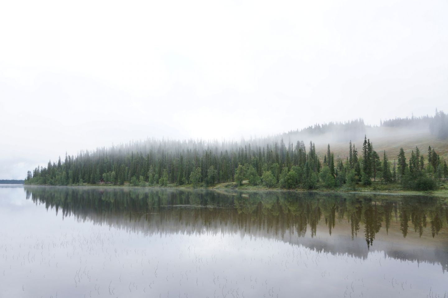 Mist rolls over the pines to the river in Lapland, Europe's last wilderness