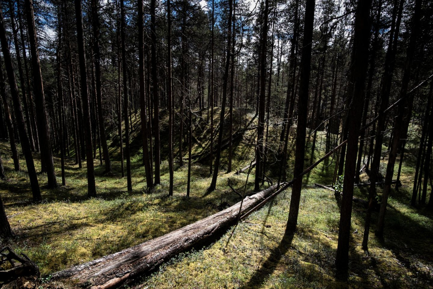 A forest view in Lapland, Europe's last wilderness