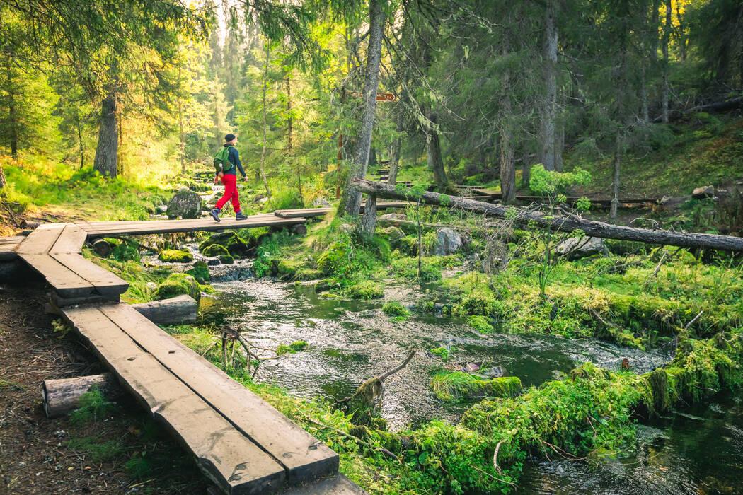 Varkaankuru nature trail in Ylläs