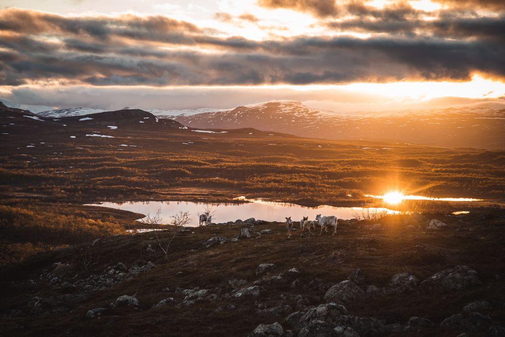 Midnight Sun in wilderness location