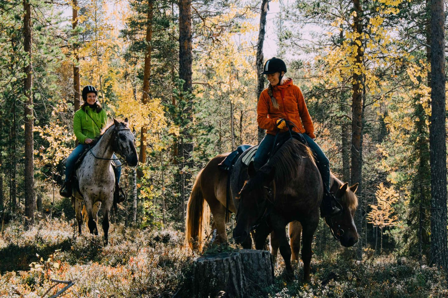 Riding horses through the forests of Pyhä-Luosto, Finland in summer