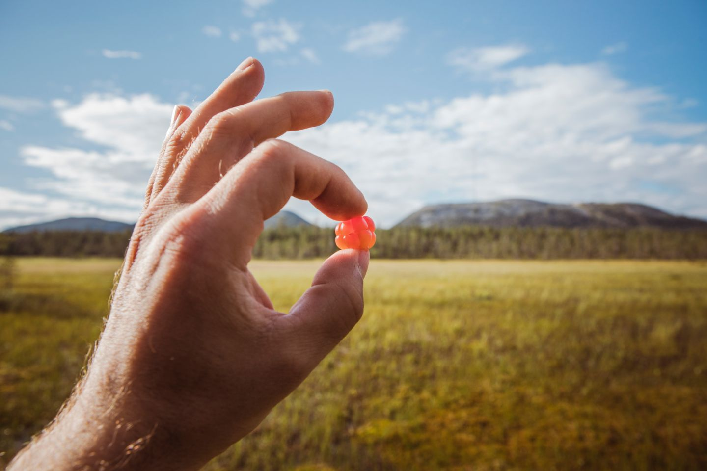 Picking berries during a slow travel trip to Finnish Lapland in the summer
