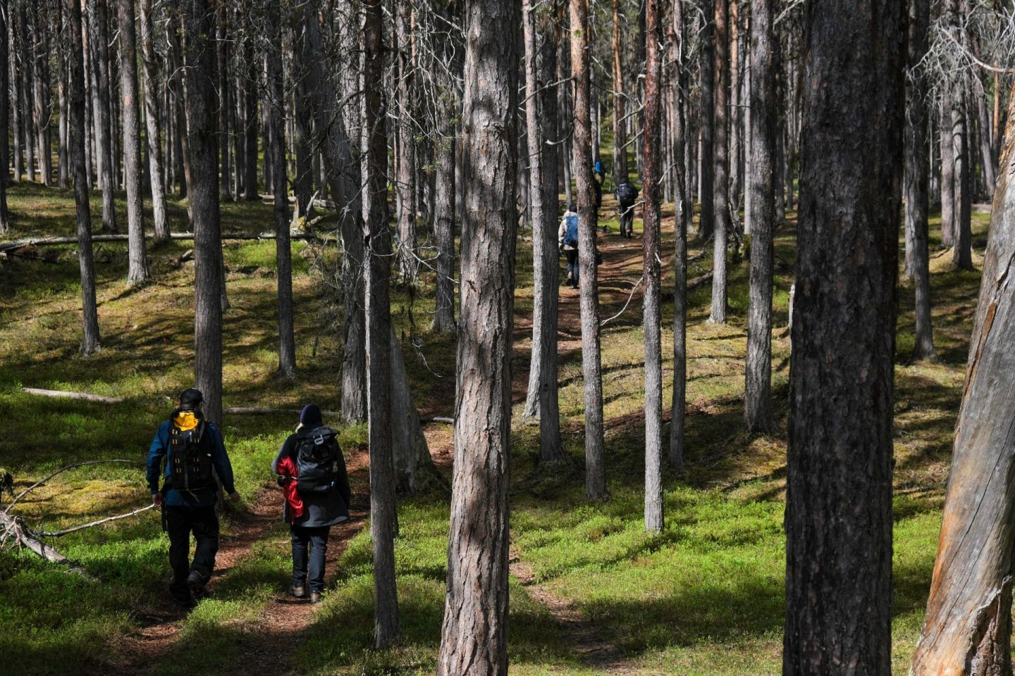 Hiking a national park during a slow travel trip to Finnish Lapland in the summer