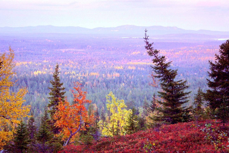 The view outside the village of Ruka-Kuusamo, Finland