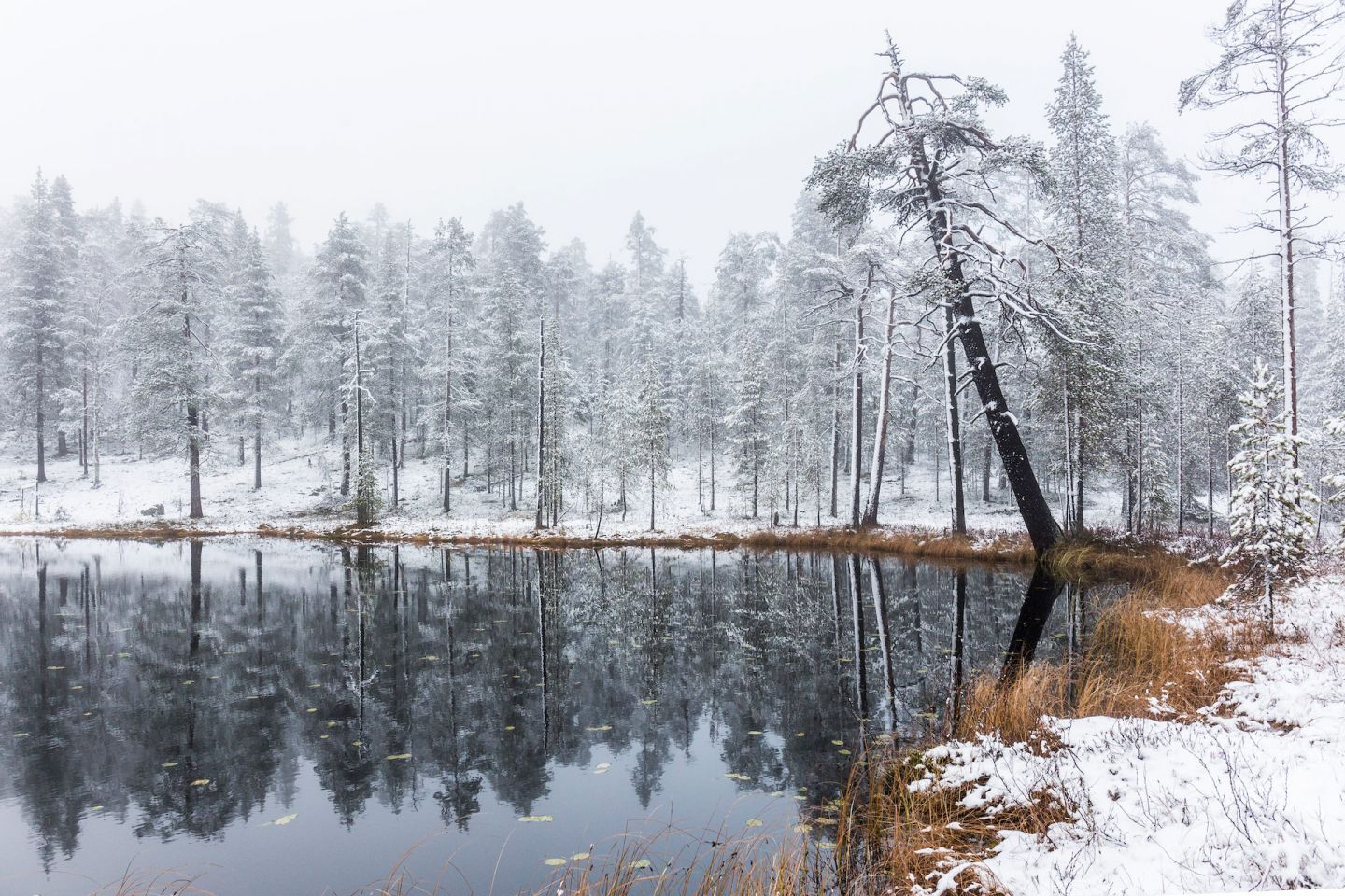 Pyhä-Luosto National Park in Lapland, Finland