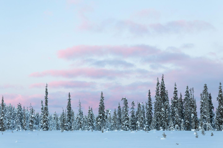 Winter in Urho Kekkonen National Park, Savukoski, Lapland, Finland